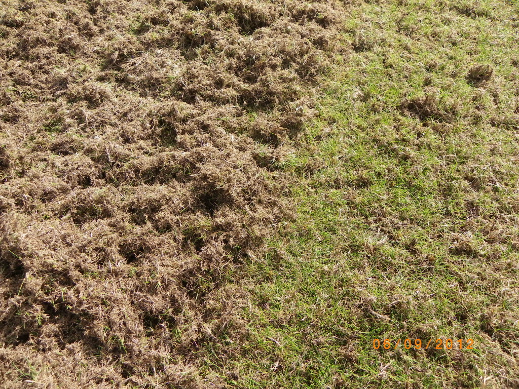 Scarifying out the moss and thatch