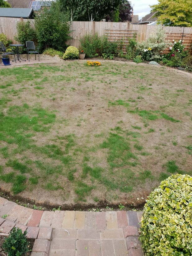 Damaged lawn during the summer heat