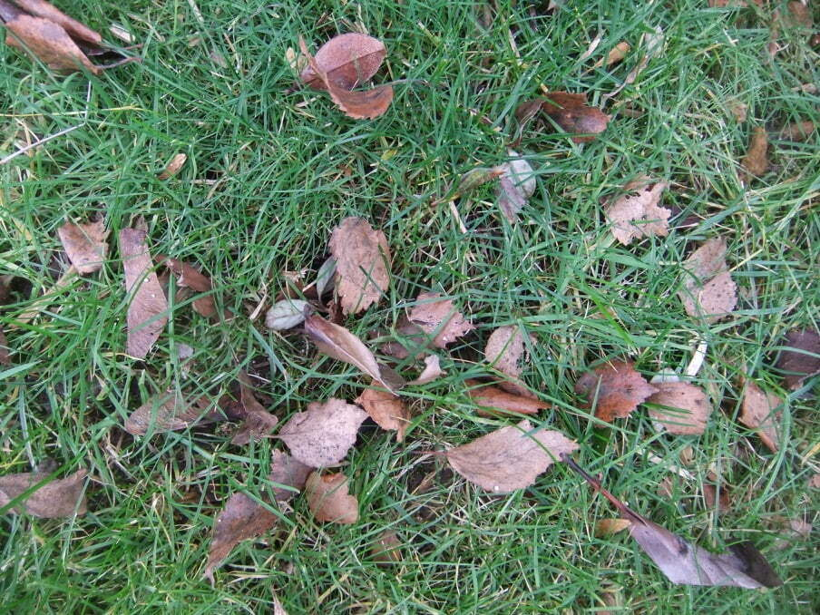 Lawn Covered with Leaves