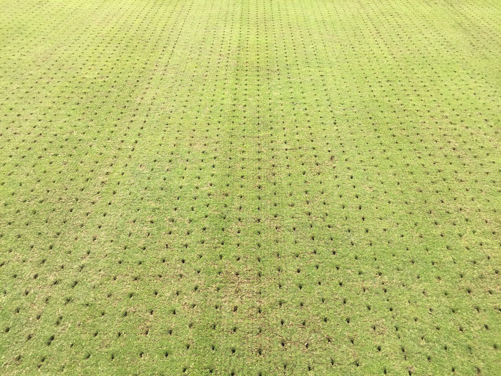 Spiked Aeration on a UK lawn