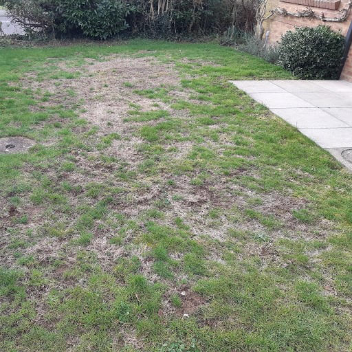Lawn Dry Patch